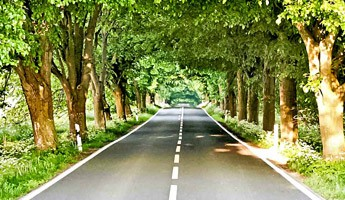 Road Tipp – 2.900 Kilometer lang: Die Straße der Alleen